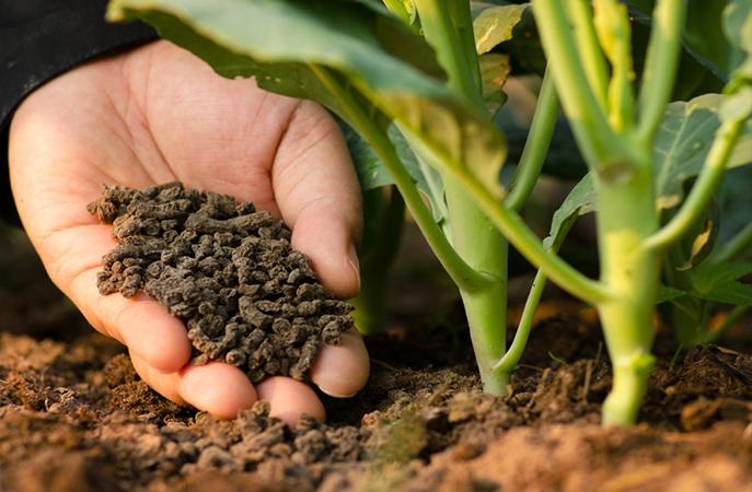 Dự án Viện nghiên cứu Ứng dụng Nông nghiệp INANOTECH