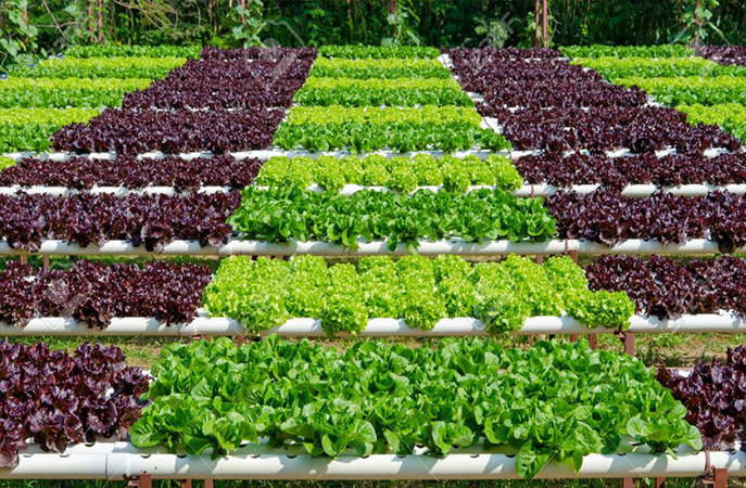 What is organic agricultural production?
